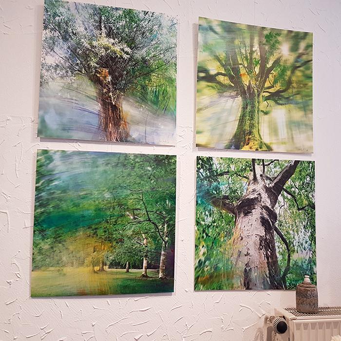 Anke-Sowada-Baumbilder